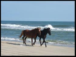 Wild_horses_2_blog_2